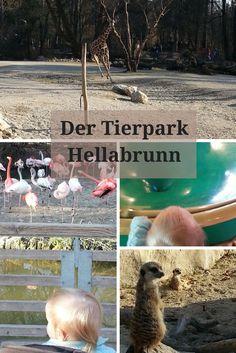 Der Münchner Tierpark ist immer einen Besuch wert, denn dort tummeln sich viele wunderbare Tiere, die es zu entdecken gibt. Für Kinder aller Alterklassen ist dort wirklich etwas geboten.