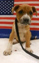 Lincoln is a little pup with a lot of energy. Adopt him today!