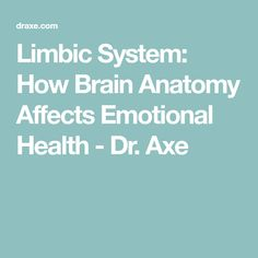 Limbic System: How Brain Anatomy Affects Emotional Health - Dr. Axe