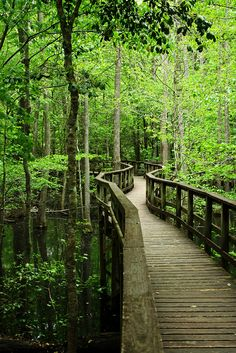 Congaree National Park in South Carolina preserves the largest tract of old growth bottomland hardwood forest left in the United States.  (by wsweet321)