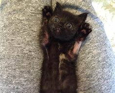 winnie the rescue black kitten from tenth life