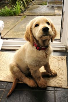 http://bgdphotooftheday.com/cute-puppy-bailey/. Leuk Puppy Bailey Bailey de pup kon niet leuker zijn als hij probeerde. Wilt u meer schattigheid kijken naar een leuke Race van de Hond van het Puppy .
