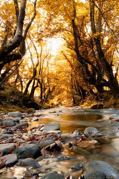 Golden autumn sky water sun trees autumn rocks gold