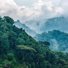 Rainforest of Bwindi Re-post by Hold With Hope