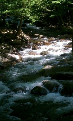 On the Greenbrier trail in the Great Smokey Mountains National Park TN