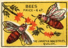 Bees -gorgeous vintage matchbook via Agence Eureka I Love Bees, Birds And The Bees, Vintage Bee, Vintage Labels, Vintage Linen, Vintage Ephemera, Buzz Bee, Matchbox Art, Bee Art