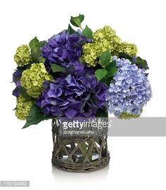 A beautiful deep blue hydrangea bouquet in a willow vase. The image has an embedded path which may be used to delete the reflection if desired. Photographed on a bright white background. Extremely...