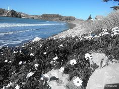 Castle Point Beach, NZ.