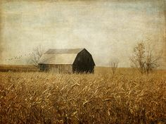 After the Leaves by raewillow, via Flickr