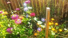 Garden Photos, Party, Parties