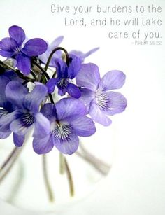 "Violet (Viola odorata) - Native to Europe Asia and N. The essential oil is collected from the leaves which provide earthy notes. Greeks referred to the violet as the ""flower of fertility. My Flower, Purple Flowers, Red Roses, Beautiful Flowers, Violets Flower, Birth Flower, All The Bright Places, All Things Purple, One Thousand Gifts"