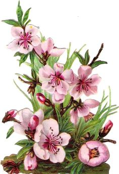 Oblaten Glanzbild scrap die cut chromo Blume flower 11,5 cm Frühling spring