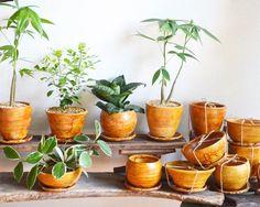 小さなグリーン、植木鉢の販売(Kitowa)