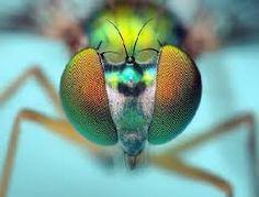 Картинки по запросу муха в полете фото