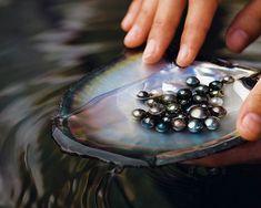 black Tahitian Pearls - https://www.pearlsofjoy.com/Tahitian-Pearls_c_8.html