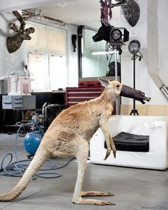 studio snapshot - it took a lot of persuasion until my faithful roommate accepted the protective measures > meanwhile it seems to get a little bit out of control…. > see also post from June 19 #rolandfaesser #kangaroo #animalportrait #animalphotography #cult #artstudio #artiststudio #snapshot #currentmood #protection #facemask #improvisation #itworks #protectyourself #coronamemes #homeoffice #animalart #performanceart #contemporaryart #themaskproject Sculpture Painting, June 19, Roommate, Figurative Art, Pet Portraits, Animal Photography, Kangaroo, Giraffe, Contemporary Art
