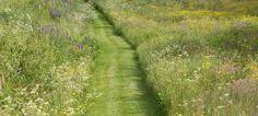 Mown path through perennial wild flower meadow