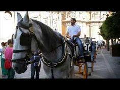 Cordoba poesia Horses, Videos, Animals, Cordoba, Historia, Animales, Animaux, Animal, Animais