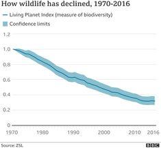 Wildlife in 'catastrophic decline' due to human destruction, scientists warn - BBC News Bbc News, Destruction, Climate Change, Wildlife, Environment, Science, Scientists, World, Conservation