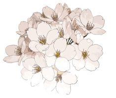 tumblr ship transparent | Flowers Transparent Black And White Black And White…