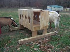 This is a great box for adding whole bales of peanut hay for the goat ladies.