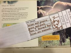 Retelling Nonfiction Flipbook - Interactive retelling book helping students gather important facts while reading. Determining Importance Nonfiction Activities, Fiction And Nonfiction, Readers Workshop, Writer Workshop, Leveled Books, English Reading, Important Facts, Reading Strategies, Retelling