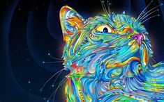 Art Colorful Cat Graphic HD Wallpaper High Definition HD Wallpapers