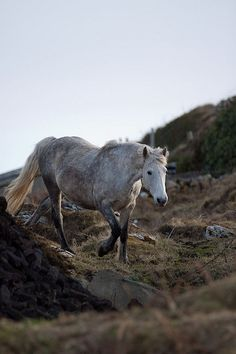 Connemara Ponies by Rozpravka
