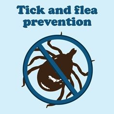 Our client spotted a tick today! Yes, in February!  Here is some advice!