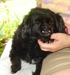 Adopt Charlie On Dog Adoption Help Homeless Pets Homeless Pets