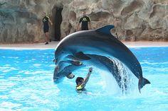 Delfines en Loro Parque