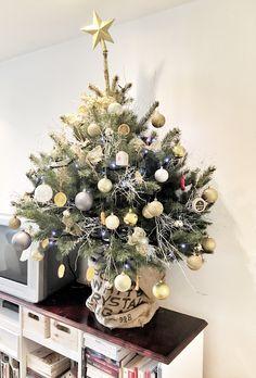 Christmas tree. Choinka w doniczce.