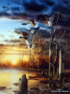 Jim Hansel Evening Splendor