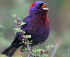 a801f8814 14 Best Favorite Birds images