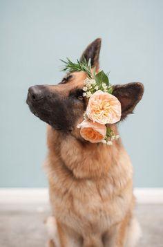 a loving dog is a woman's best friend