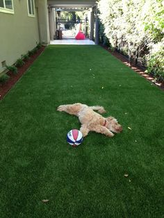 Innovative New Uses For Artificial Turf Youve Never Thought Of