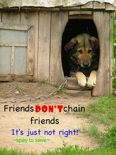 The sad look on this dog's face breaks my heart. Living life on a chain with no love, is no life.save your dogs