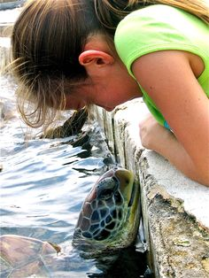 Grand Cayman Turtle - photo Tiffany Hedge