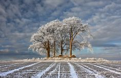 Frost-dusted trees stand alone in a wintry field in Stirlingshire, Scotland