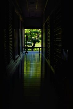 Kyoto 床みどり