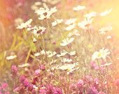 Nature Photography, Daisies, Clover, Flower, Meadow, Wild flowers, Wall Decor.
