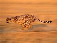Safari ve Safariye Gitme Rehberi