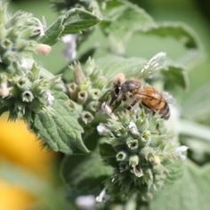 So You Wanna Keep Bees? Best Class for Beginners Is On-line | Right to Thrive