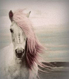 #pink #horse