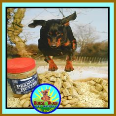 Website photo for our Paw-Nut Butter Biscuit Treats at http://www.HouseWoofDogBiscuits.com
