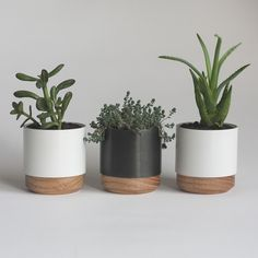 """Hand-finished planters in metal and solid wood. Ideal for desk, in a  windowsill or as a centerpiece. For low water plants and succulents.  Combine white and blackened steel planters, or choose all three in same  color.      * Each planter measures 3"""" diameter, 3 ⅛"""" tall     * Black planter: Blackened steel metal body.     * White planter: Powder-coat finished aluminum body.     * Solid oak base with furniture grade lacquer finish     * Stainless steel inserts included to protect planter ..."""