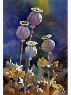 """""""Sunlit Poppy Seed Heads,"""" watercolor by Ann Mortimer. Watercolor And Ink, Watercolor Flowers, Watercolor Paintings, Watercolours, Art Floral, Illustration Blume, Guache, Oeuvre D'art, Painting Inspiration"""