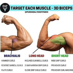 We always recommend the compounds like pull ups and rows for bicep growth. but this is a nice graphic showing how different isolation movements hit different heads. When starting on a. Gym Workout Chart, Gym Workout Tips, Workout Diet, Cardio Gym, Muscle Fitness, Fitness Tips, Fitness Plan, Health Fitness, Big Biceps Workout