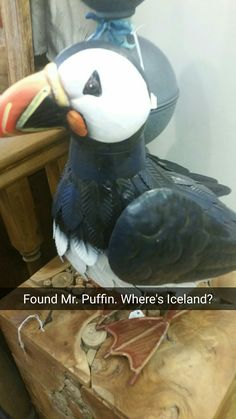 Flirting with the fridge for a vine, duh. But where's Mr. Puffin's bow tie!?