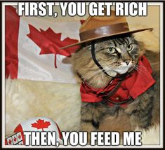 Happy Canada Day from Abbie (via Alaidh…) Funny Animal Memes, Funny Animal Pictures, Funny Animals, Funniest Animals, Cat Memes, Dominion Day, Canadian Humour, Cat Dressed Up, Animaux